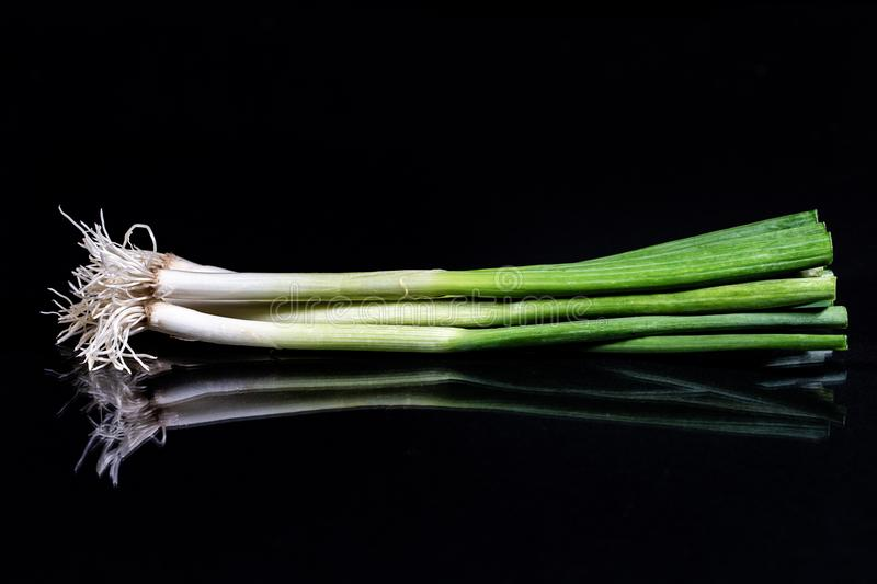 Close up of isolated spring onion on black reflecting background stock photo
