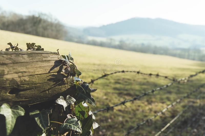 A close up of ivy on a fence post on a sunny winters day. With the countryside blurred in the background. With a retro faded edit stock image