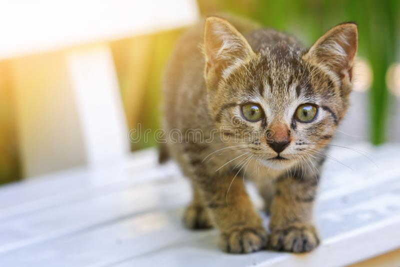 Close up kitten grey beautiful and Light tone Yellow.  royalty free stock photography