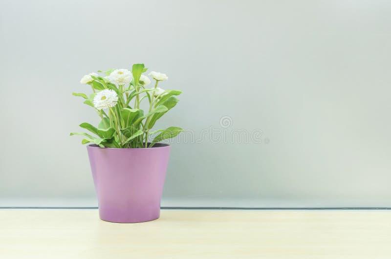 Close-up kunstmatige installatie met witte bloem op purpere pot op vaag houten bureau en de berijpte geweven achtergrond van de g stock fotografie