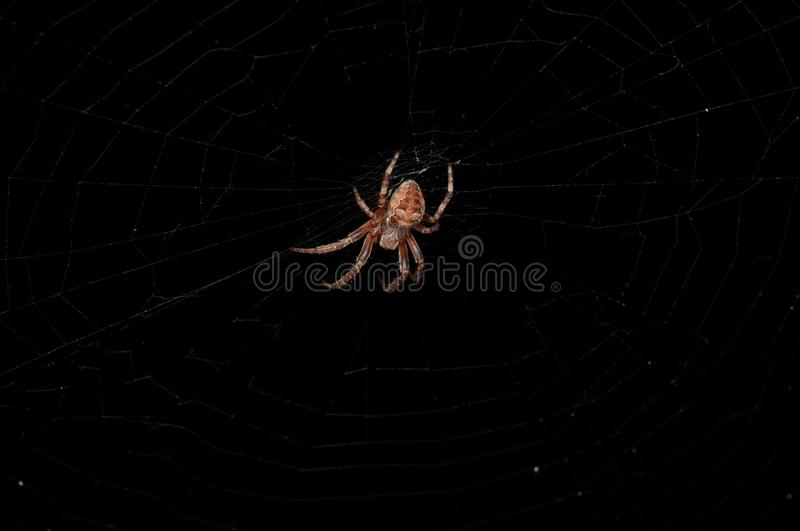 Close-up of the back of a brown and red forest spider spinning a web on a black background stock photo