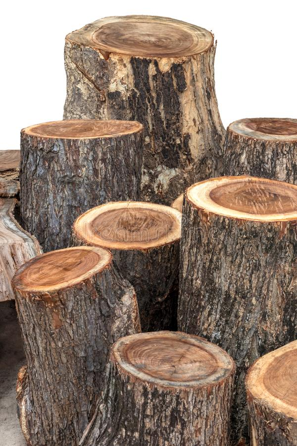 Close-up of large stumps royalty free stock photos