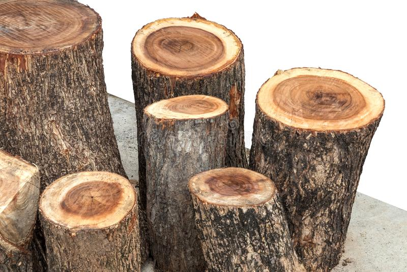 Close-up of large stumps stock photo