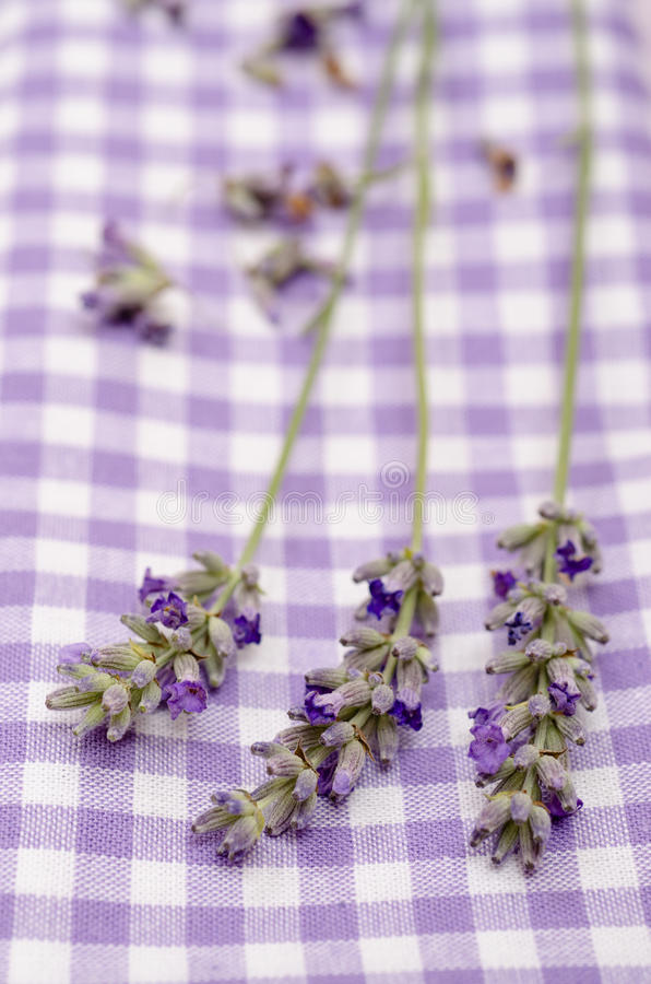 Download Close Up Lavender In Vertical Format Stock Photo - Image of cloth, fragrance: 34271550