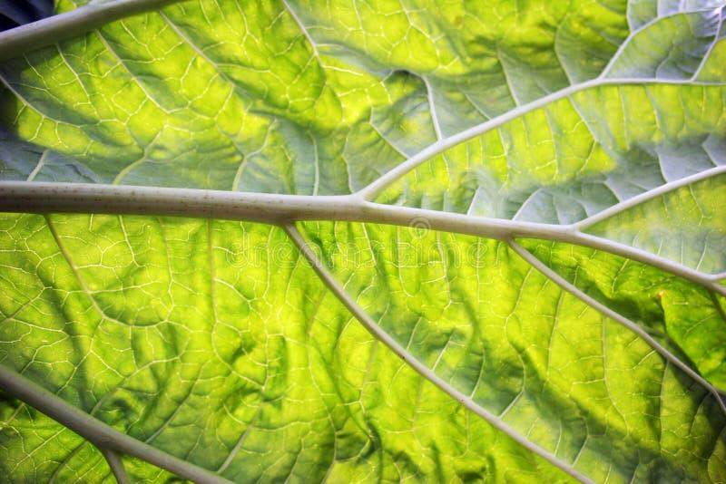 Download A close up of a leaf stock image. Image of veins, leaf - 111823