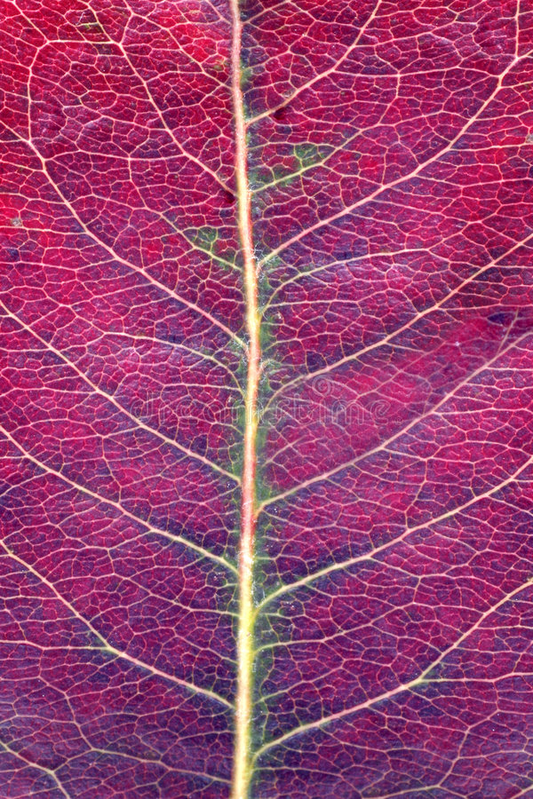 Download Close Up Of A Leaf Stock Photography - Image: 1404812