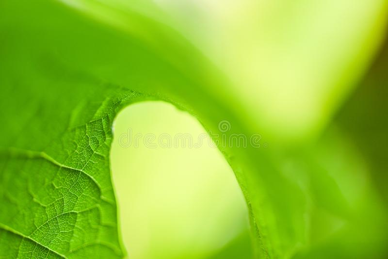 Close up leaf beautiful blur soft focus tree background for leaves nature green wallpaper and backdrop. Close up leaf beautiful on blur soft focus tree stock image