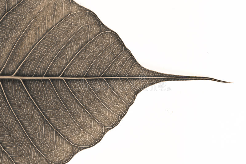Close Up Of Leaf In Monochrome Stock Photography
