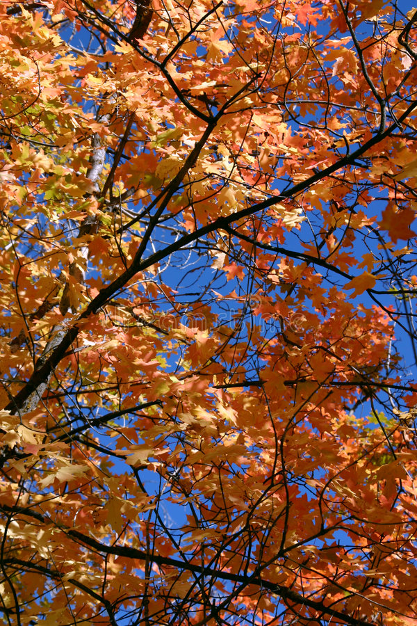 Download Close Up Leaves - 761 stock photo. Image of nature, autumn - 271582