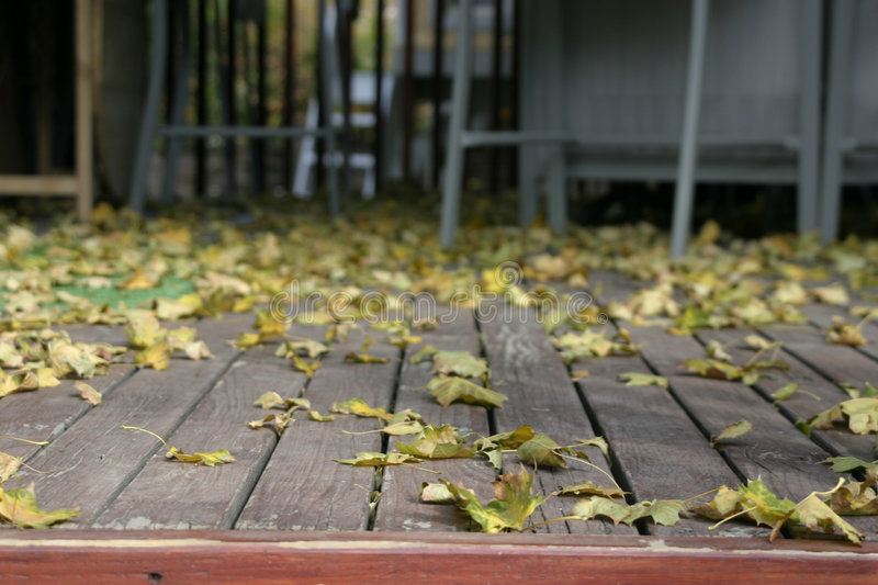 Close Up On The Leaves Falling Royalty Free Stock Photography