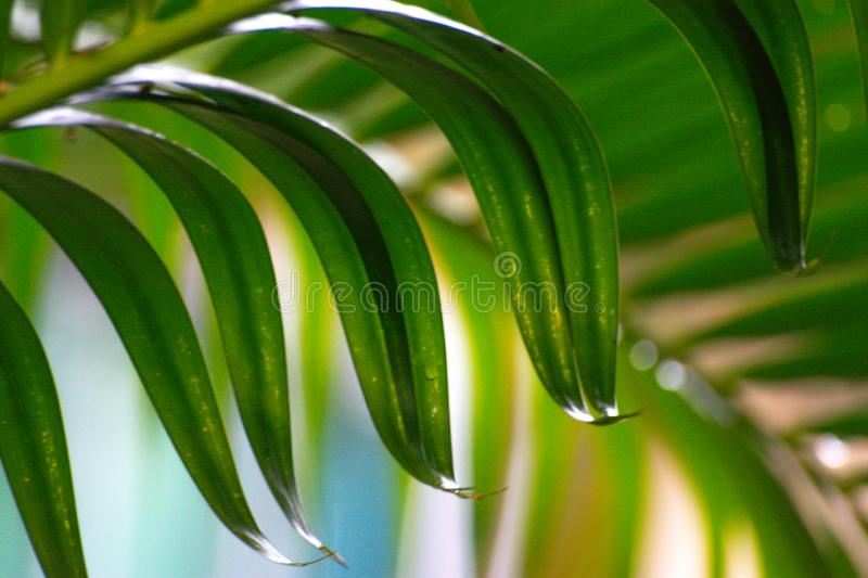 Close up the leaves of palm trees royalty free stock photos