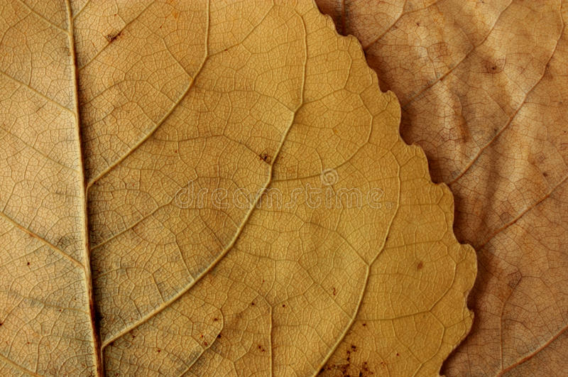 Close up of leaves texture stock image