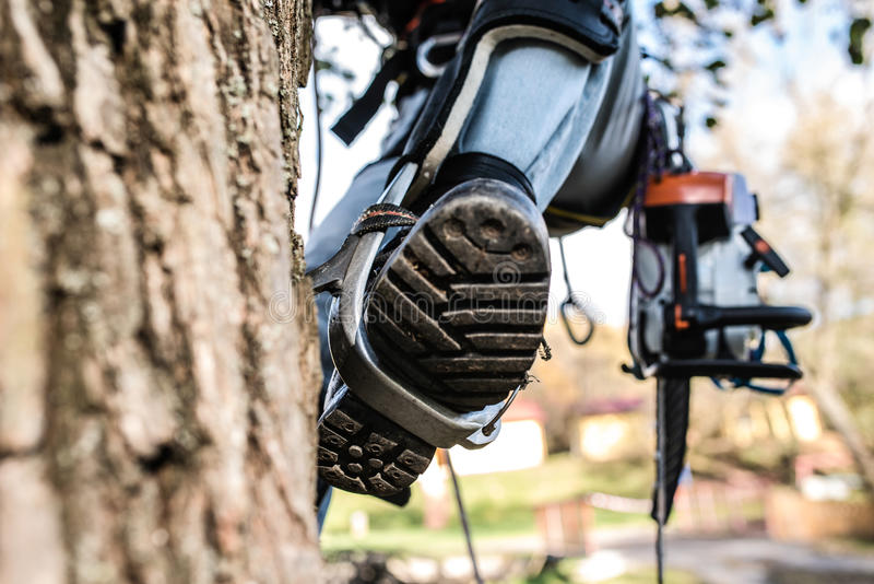 Close up of leg of lumberjack with a chainsaw climbing a tree. Close up of leg of lumberjack with a chainsaw and harness prepared for pruning a tree. A tree stock photos