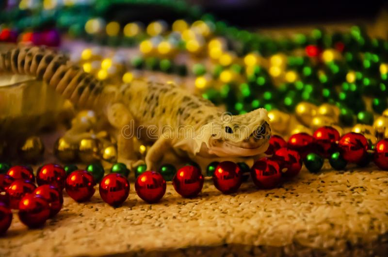 Close-up of a leopard gecko shedding on New Year`s Eve. We start the New Year in a new skin royalty free stock photos