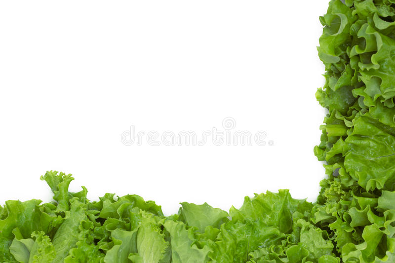 Close up of lettuce in semi-flame shape stock images