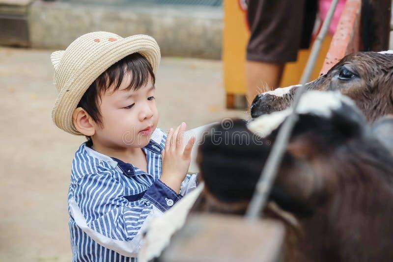 Close-up leuk Aziatisch jong geitje het melken kalf door fles melk op landbouwbedrijfachtergrond royalty-vrije stock afbeeldingen
