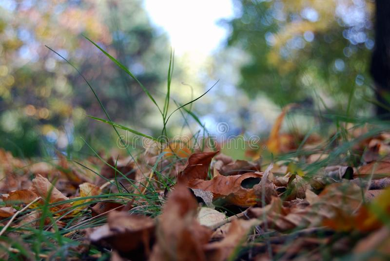 Close up of leves in grass royalty free stock photo