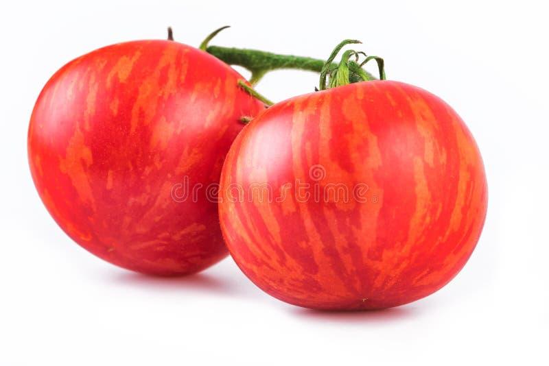 Close up listrado do tomate dos tomates, cultivar de Tigerella foto de stock royalty free