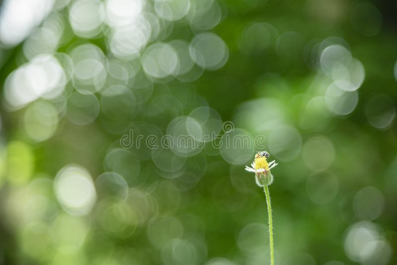 Close up of little flower and bee with green leaf nature blurred and light bokeh background stock photography