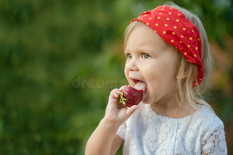 Close up of little girl eating ripe strawberry in nature. Child enjoys a delicious berry. Copy space. Concept of healthy food stock photo