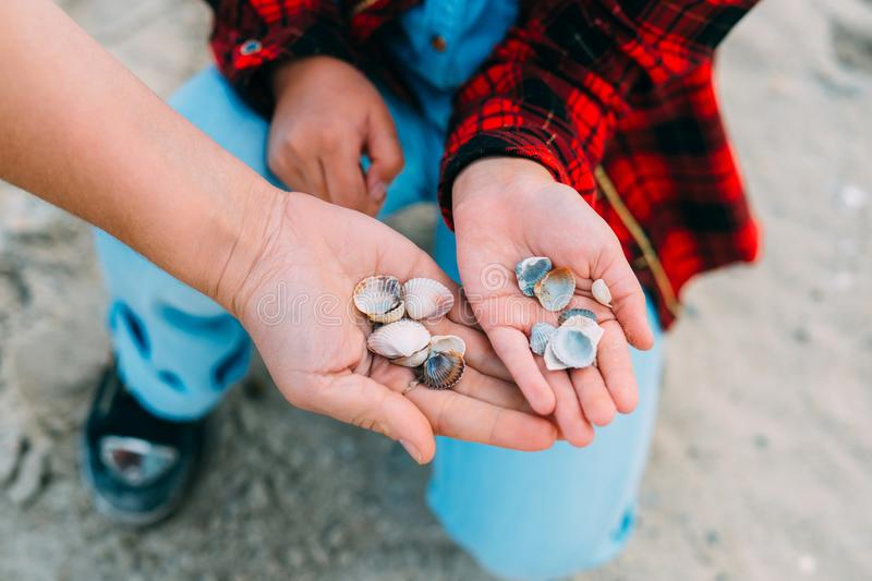 little girl holding sea shells in her hands. stock images