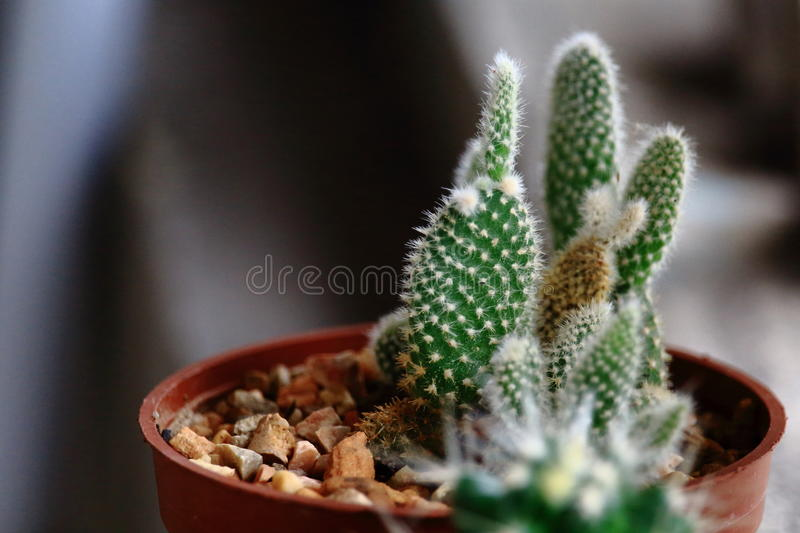 Download Close Up Of Little Green Cactus In Plastic Tree Pot Stock Photo - Image of thorn, plant: 75441084