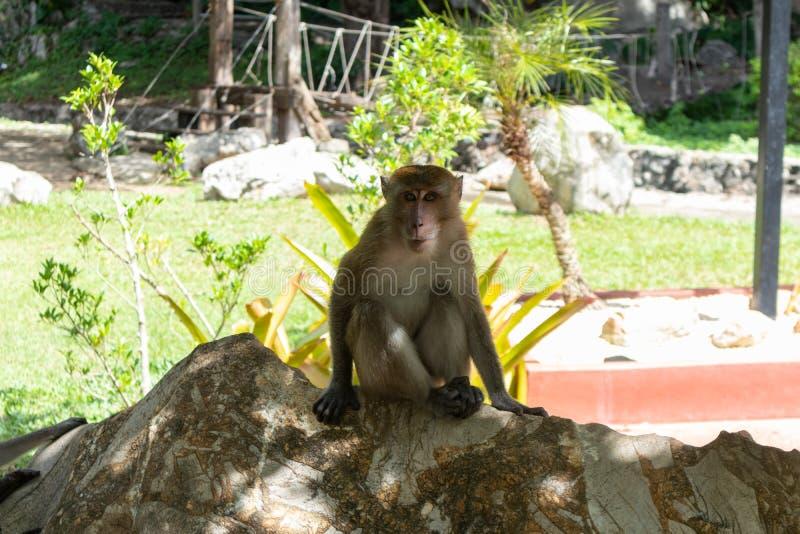 Little money playing around at Phatthalung, Thailandclose up of little monkey playing around at Phatthalung, Thailand. Close up of little monkey playing around stock images