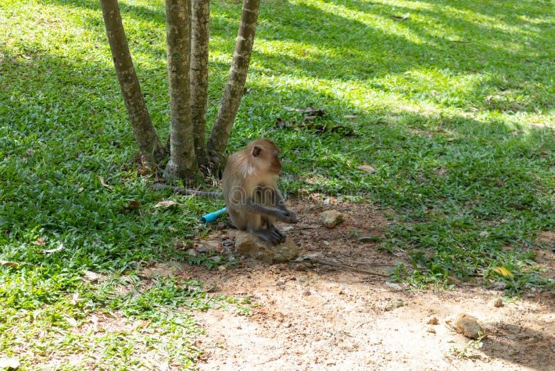 Little monkey playing around at Phatthalung, Thailand. Close up of little monkey playing around at Phatthalung, Thailand stock image