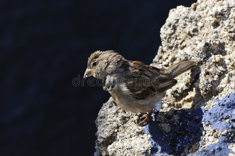 Download Close-up On A Little Sparrow Stock Image - Image: 17282667