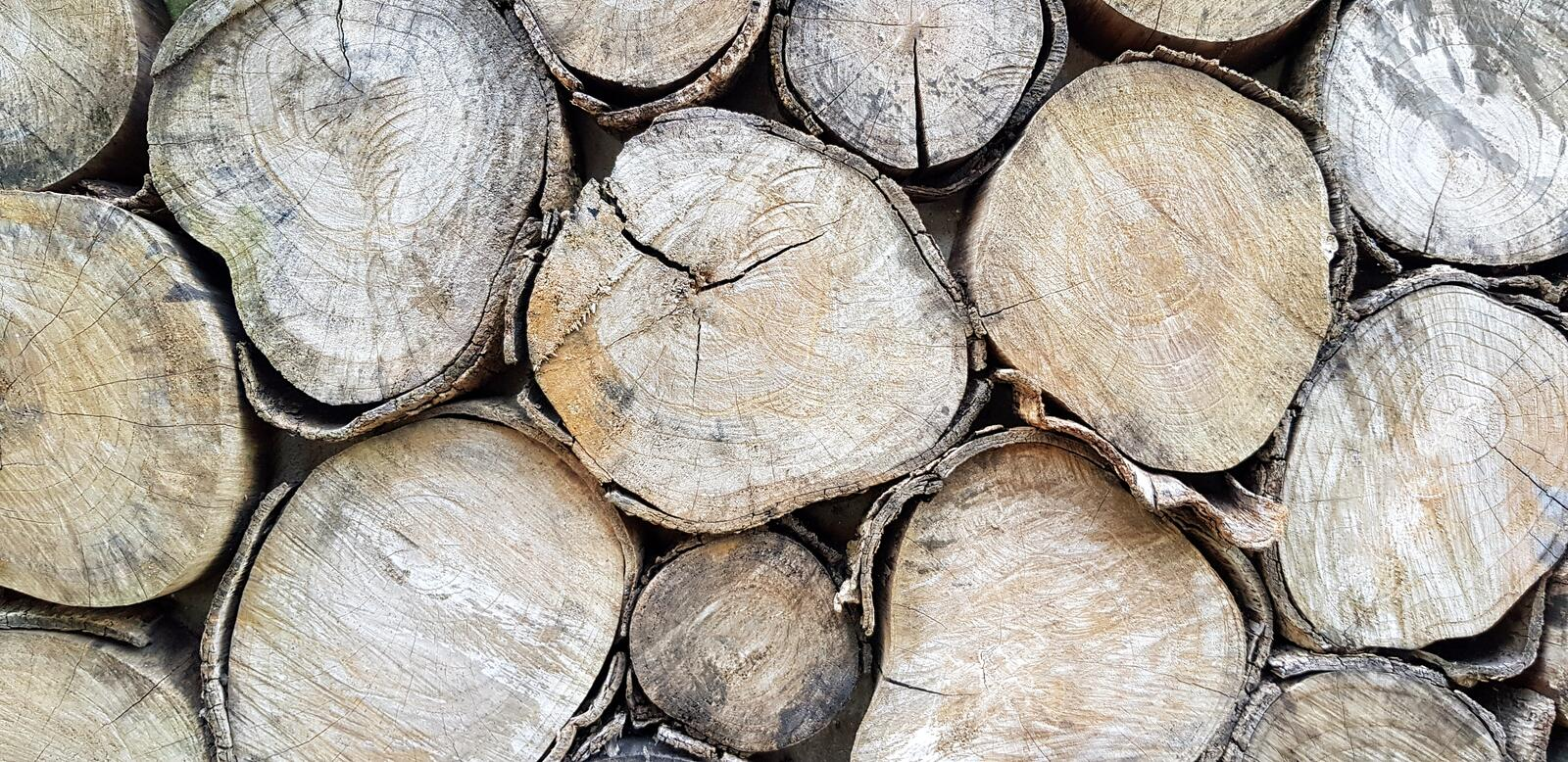 Close up log, wood pile or timber stack for background. Art wallpaper, Natural material, Abstract and Round shape concept royalty free stock photography
