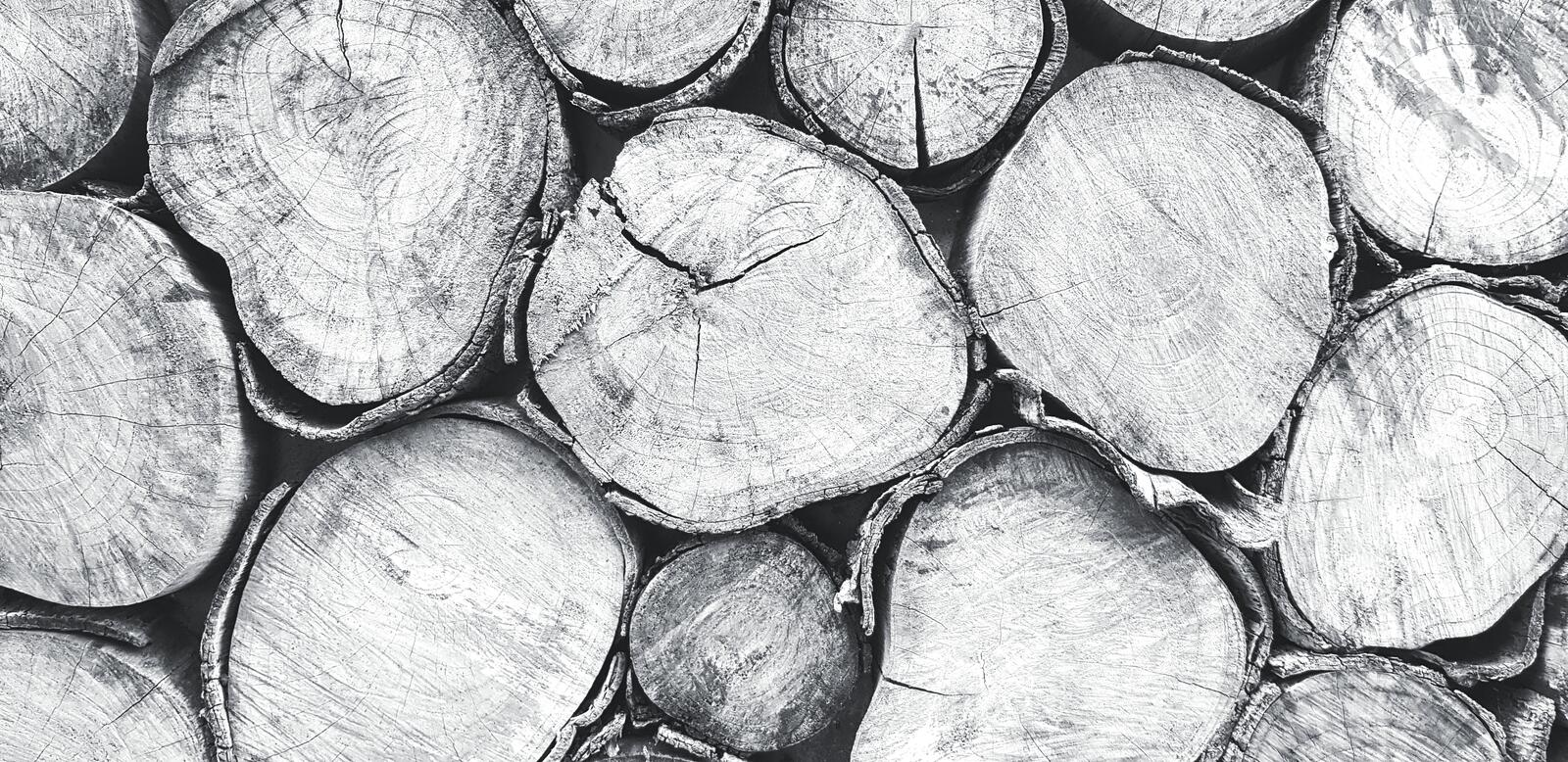 Close up log, wood or timber stack for background in black and white tone. Art wallpaper, Natural material, Abstract and Round shape concept royalty free stock photography