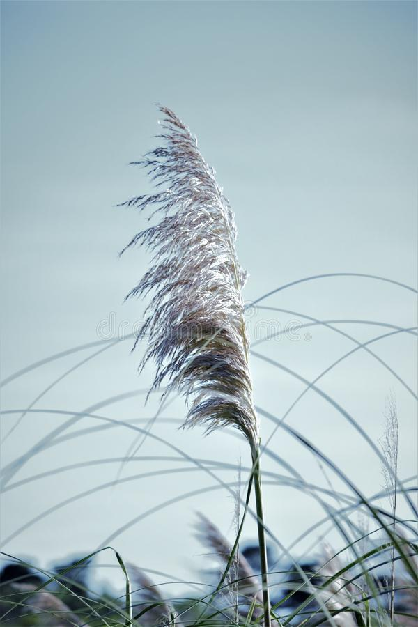 Close up of long grass stock photography