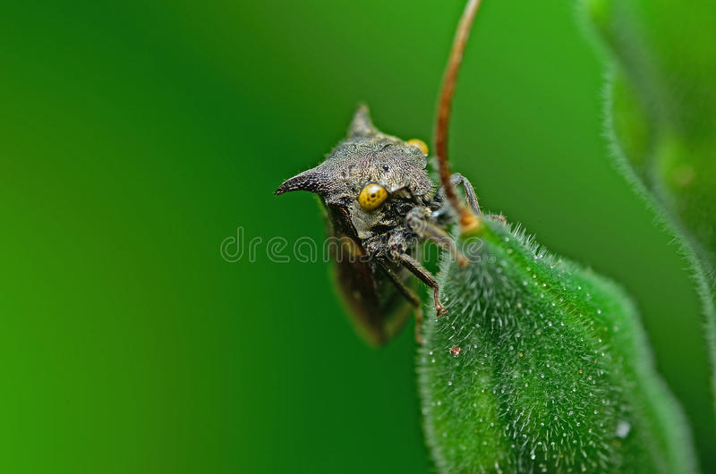 Close Up Of Long Horn. Beautiful Details Of Long Horn royalty free stock photo