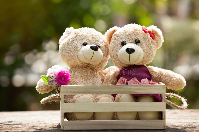 Close up lovely brown two teddy bear in wooden box concept, love stock photography