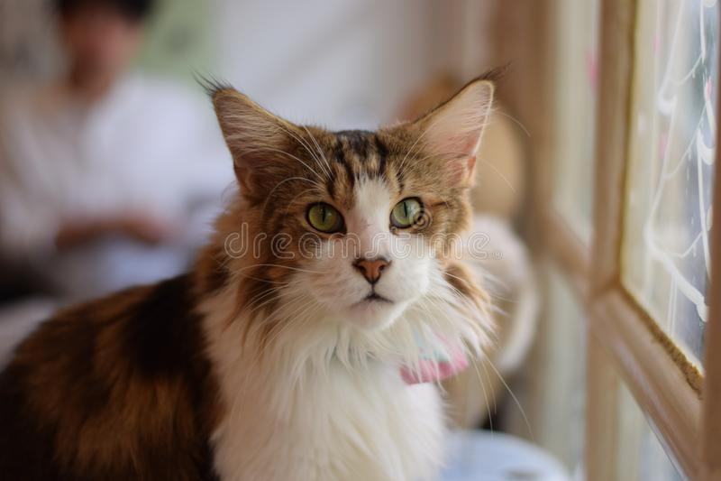 Lovely cat royalty free stock photo