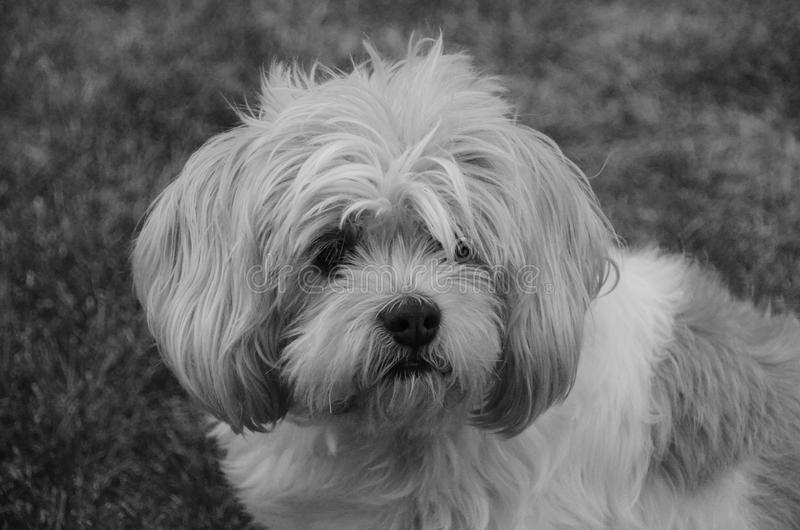 Close up macio do cachorrinho imagens de stock royalty free