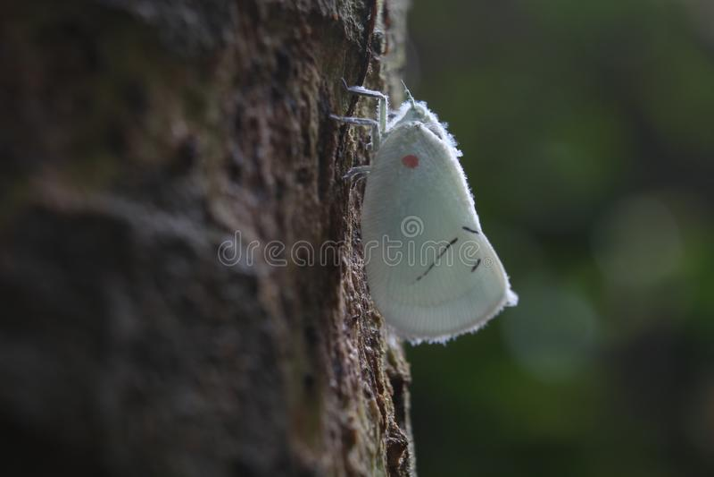 Close up macro beautiful white butterfly on tree. stock image