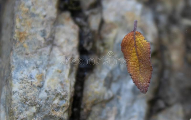 Close up of a macro leaf. Fall concept stock photos