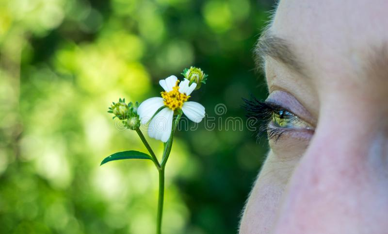Close up macro picture of a green blue eye isolated of a young woman face with a daisy flower royalty free stock images