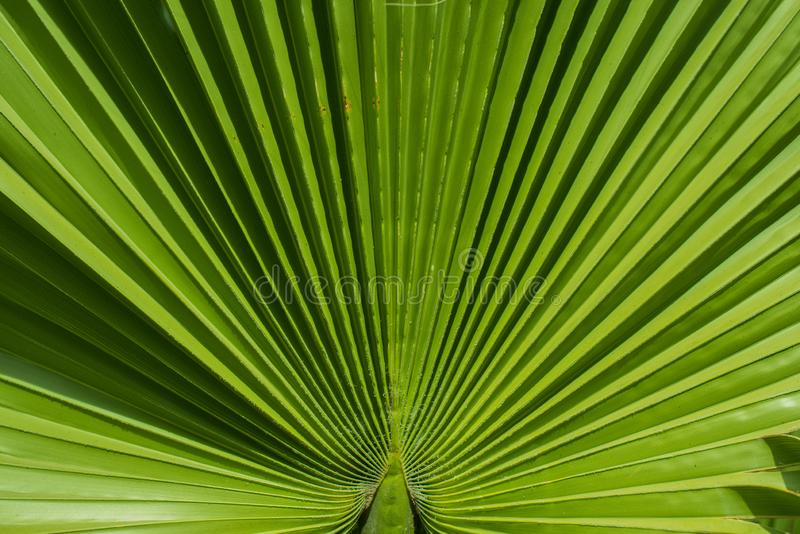 Close up macro shot of lines on plant stock photography