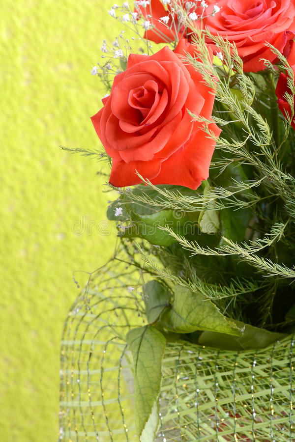A close up macro shot of a red rose. Nature concept royalty free stock photos