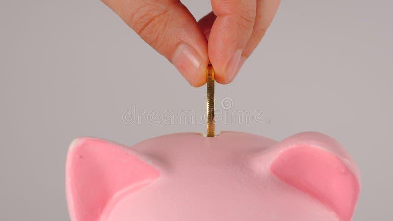 CLOSE UP: Male hand throws golden coin into a pink piggy moneybox stock photos