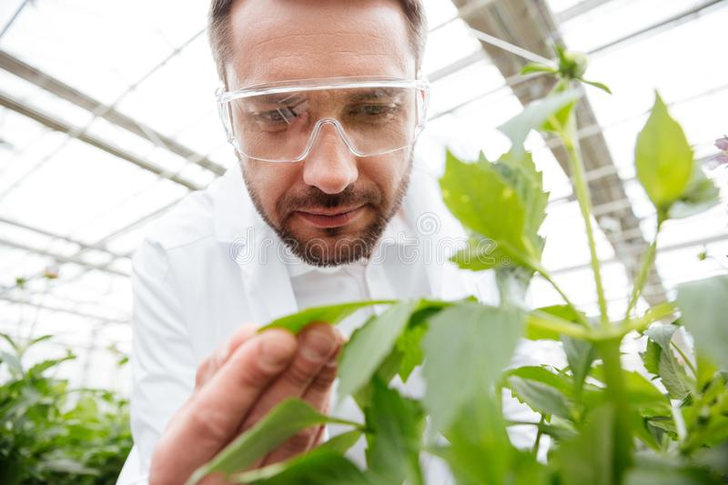 Close up of man in glasses working with plants royalty free stock photo
