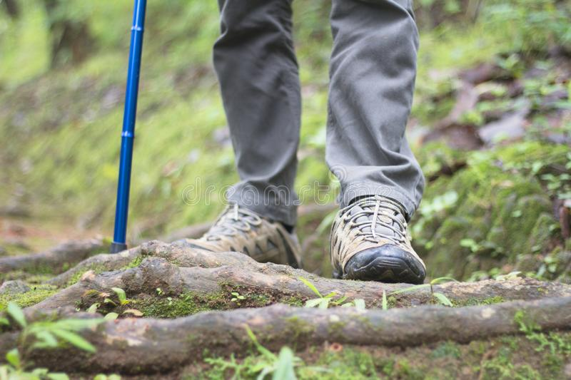 Close-up of man hikers shoes. A man walks along a path in the woods, Walk in the forest to climb the mountain. royalty free stock photo