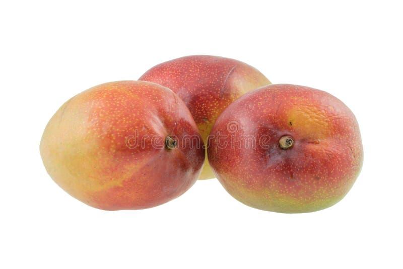 Close-up of mangoes on white backround stock photography