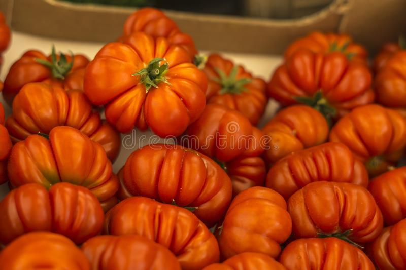 Close-up of many little tomatoes.  royalty free stock photo