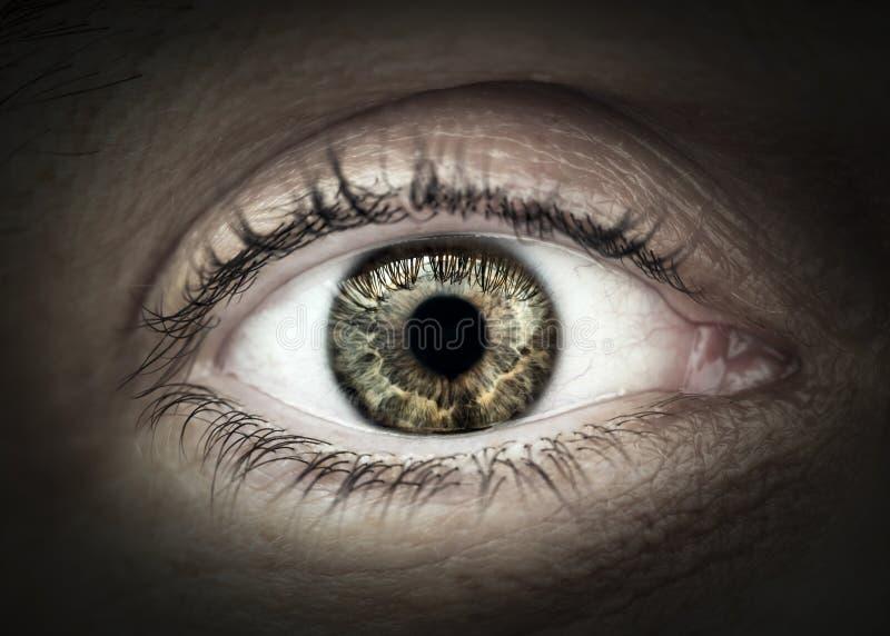Close up masculino do macro do olho foto de stock