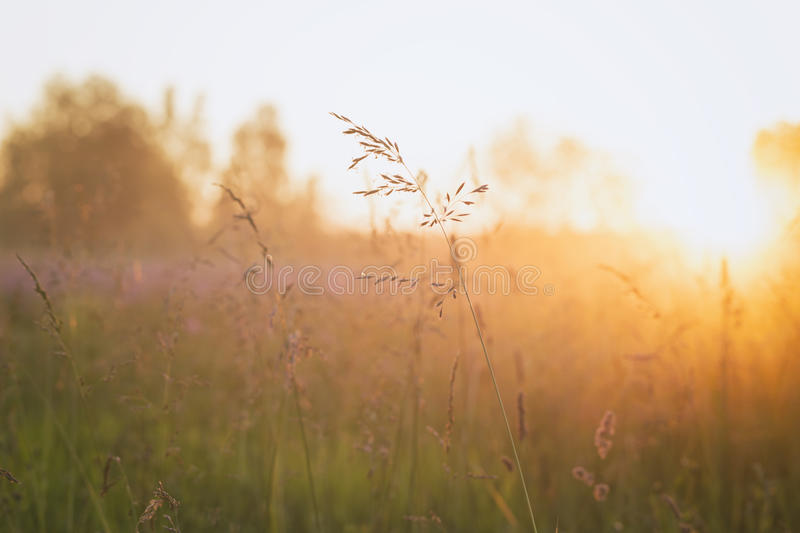 Close up meadow grass in evening sunlight. Vintage toned stock image