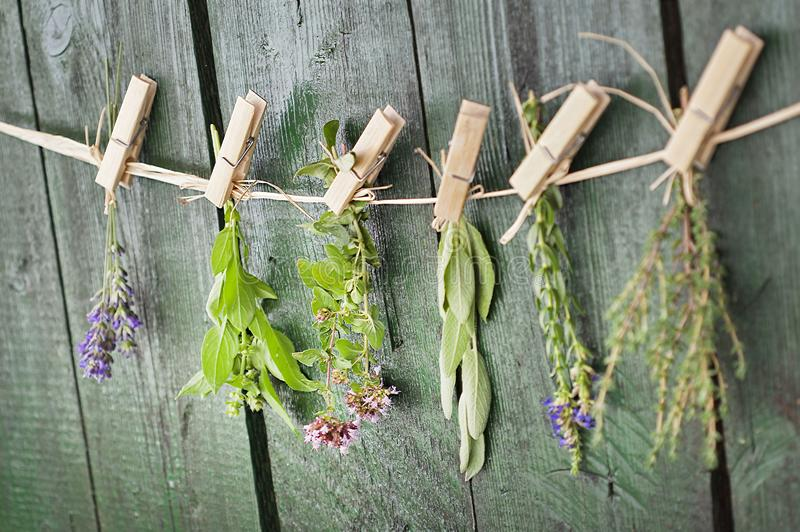 Close up of Mediterranean herbs bouquets, sage, basil, lavender, thyme on rustic green wooden table background hanging with wooden stock image