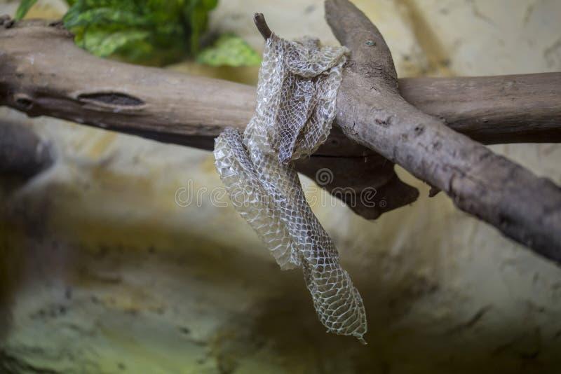 Close-up met huiddetail van een slang na de verandering van huid die hangen royalty-vrije stock afbeelding